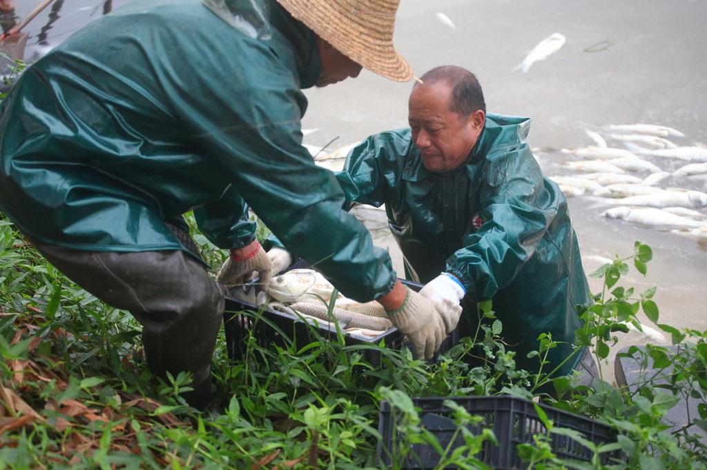 92亩鱼塘一夜死20万斤鱼 老板损失百万元图片