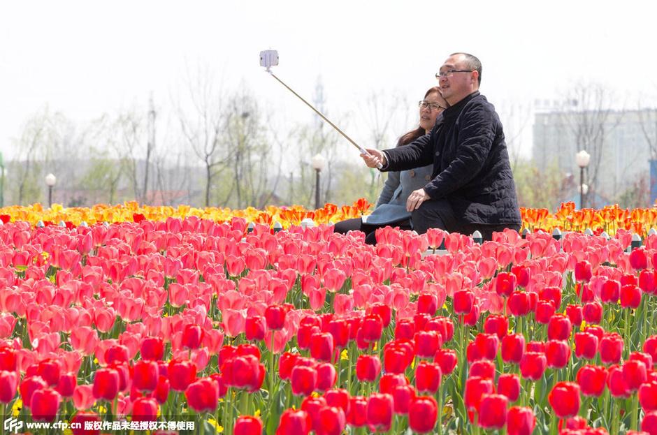 """千亩""""荷兰花海"""" 郁金香已盛开2015.4.13 - fpdlgswmx - fpdlgswmx的博客"""
