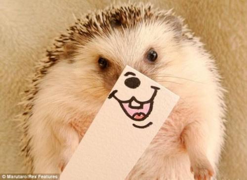 小主人坚持每天更新marutaro的生活照,让这位宠物小明星赚足眼球.