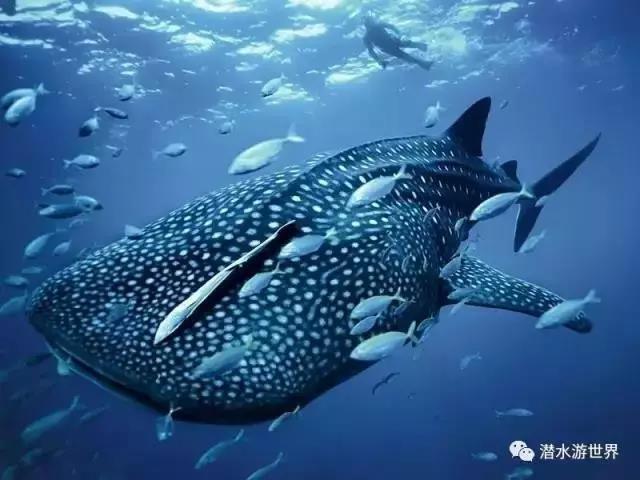 壁纸 动物 海洋动物 鱼 鱼类 桌面 640_480