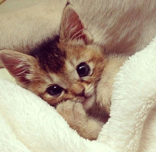 胖萌猫图片大全可爱