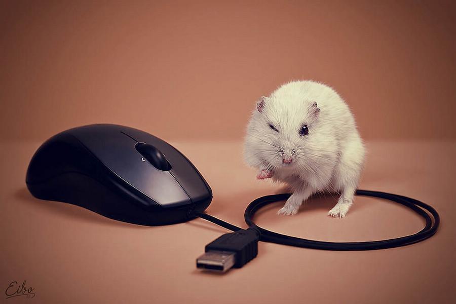 微距摄影下动物最可爱动人的一面