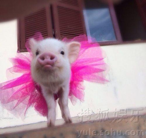 可爱的小猫的裙子