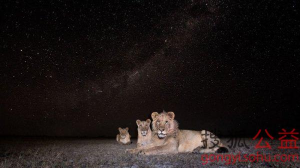星空下的非洲动物 炫酷到让人惊叹