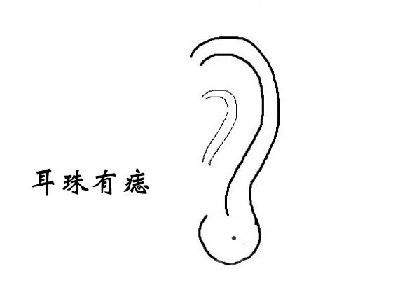 左右耳朵矢量图