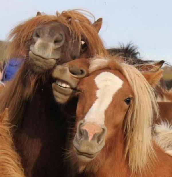 超搞笑动物自拍 看看动物们自拍时丰富的表情和pose