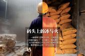 在青岛港有一群辛勤的码头工人,他们有的在零下25℃的冷库里卸载冻鱼,有的在零上60℃的篷车里装载豆...