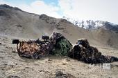 高清图:新疆特战部队曝光 重狙小组潜伏狙杀