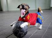 动物也爱欧洲杯:可爱狗狗穿队服 染色高卢雄鸡