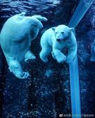组图:春天到加拿大也能看北极熊 简直不要太棒