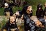 """宠物也有大牌 广告中的""""小模特"""""""