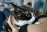 日艺术家拍猫与美胸合照 称其能抚慰人心