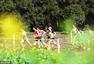 2017全国越野跑锦标赛开赛 选手穿过油菜花海