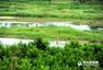 你不曾见过的极致美景 实拍大沽河湿地(组图)